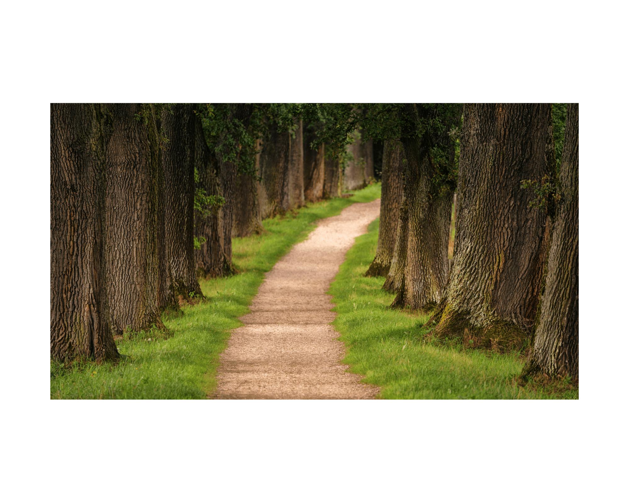 Droga wzdłuż lasu pokazuje drogę życia. Droga to pytanie co to jest misja życiowa, pytanie o cel i sens życia