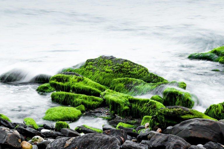 Zielone kamienie w wodzie wskazują na spokój i przepływ dobrej energii